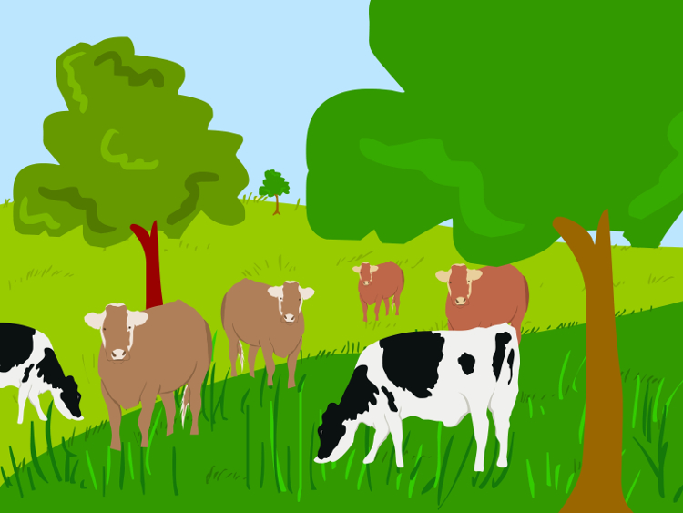 Graze-Cattle-on-Pasture-Step-6